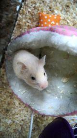 Hamster Family